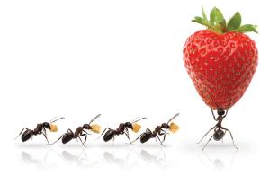 ants extraordinary Covey